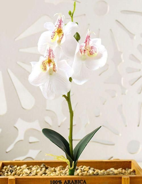 Orchidée artificielle avec feuilles blanche
