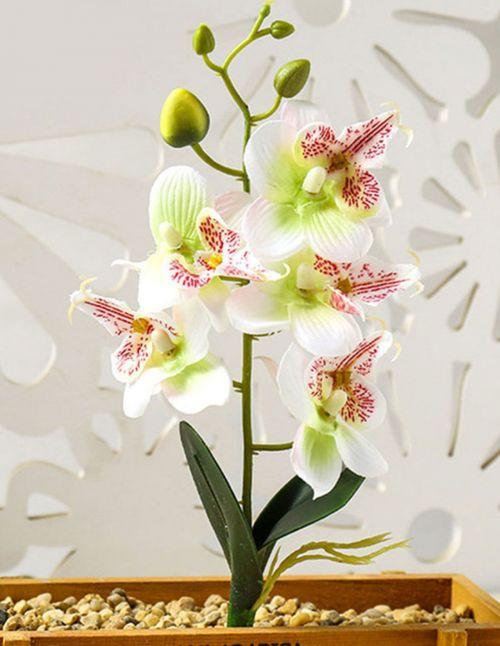 Orchidée artificielle avec feuilles verte