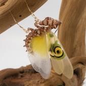 Pseudocreobotra wahlbergii 😍😍 #mantibulle #prayingmantis #mante #mantereligieuse #mantis #insects  #pseudocreobotra #pseudocreobotrawahlbergii  #mantibulle #terrarium #mantids #mantidsofinstagram #mantisreligiosa #orchidmantis #nature #insect #entomology #entomologie #love #instagood #macro #picoftheday #happy #amazing #cute #photooftheday #beautiful